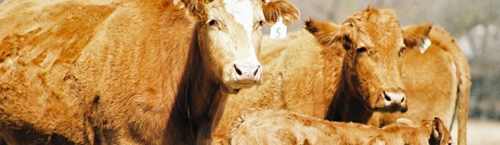 Ganadería: Sobreoferta de carne en el mercado interno