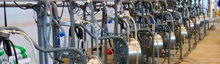 Lechería: Caída de las exportaciones lácteas en el 2014